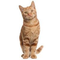 Котики от 1 года ищут дом