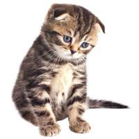 Котята до 1 года ищут дом